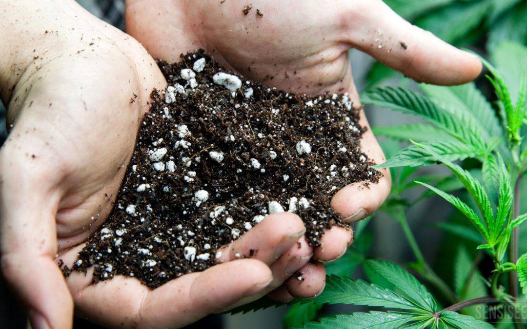 ¡Preparándonos para el Cultivo Outdoor!