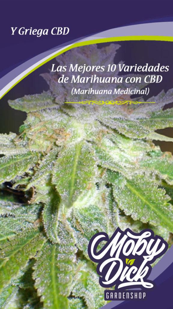 Las Mejores 10 Variedades de Marihuana
