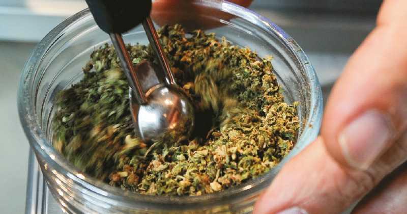 Las Mejores 10 Variedades de Marihuana con CBD (Marihuana Medicinal)