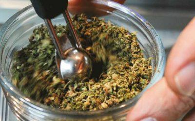 Semillas de marihuana usos y clases