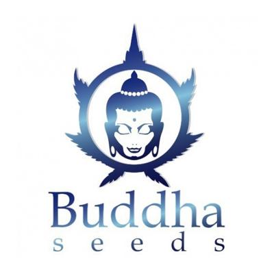 budda-seeds