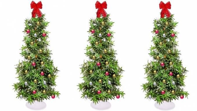 Mejores Variedades de Marihuana para Navidad
