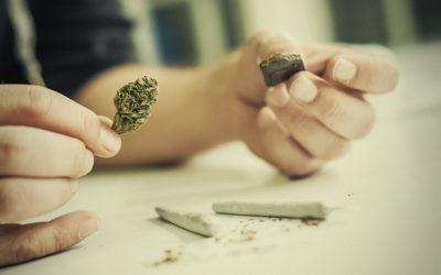 Las 05 mejores variedades de cannabis para hacer hachis