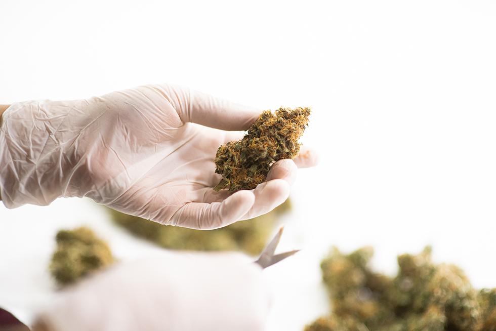 ¿Qué es el Cannabis Haze?