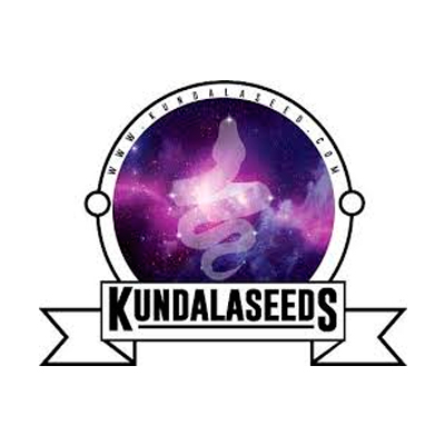 kundala-seeds