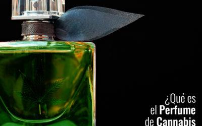 ¿Qué es el perfume de cannabis y cómo se hace?