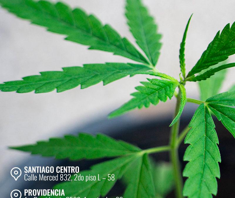 ¿Que solicita el SAG  para la siembra de Cannabis en Chile?